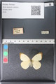 http://mczbase.mcz.harvard.edu/specimen_images/ent-lepidoptera/images/2011_03_29/IMG_079824.JPG