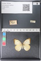 http://mczbase.mcz.harvard.edu/specimen_images/ent-lepidoptera/images/2011_03_29/IMG_079826.JPG