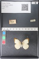 http://mczbase.mcz.harvard.edu/specimen_images/ent-lepidoptera/images/2011_03_29/IMG_079827.JPG