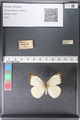 http://mczbase.mcz.harvard.edu/specimen_images/ent-lepidoptera/images/2011_03_29/IMG_079829.JPG