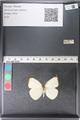 http://mczbase.mcz.harvard.edu/specimen_images/ent-lepidoptera/images/2011_03_29/IMG_079831.JPG