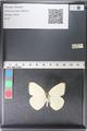 http://mczbase.mcz.harvard.edu/specimen_images/ent-lepidoptera/images/2011_03_29/IMG_079832.JPG