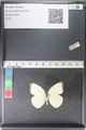 http://mczbase.mcz.harvard.edu/specimen_images/ent-lepidoptera/images/2011_03_29/IMG_079837.JPG
