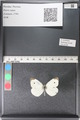 http://mczbase.mcz.harvard.edu/specimen_images/ent-lepidoptera/images/2011_03_29/IMG_079907.JPG
