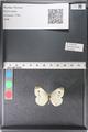 http://mczbase.mcz.harvard.edu/specimen_images/ent-lepidoptera/images/2011_03_29/IMG_079908.JPG