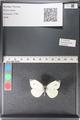 http://mczbase.mcz.harvard.edu/specimen_images/ent-lepidoptera/images/2011_03_29/IMG_079909.JPG