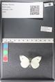 http://mczbase.mcz.harvard.edu/specimen_images/ent-lepidoptera/images/2011_03_29/IMG_079910.JPG