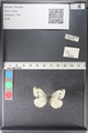 http://mczbase.mcz.harvard.edu/specimen_images/ent-lepidoptera/images/2011_03_29/IMG_079935.JPG