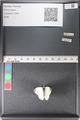 http://mczbase.mcz.harvard.edu/specimen_images/ent-lepidoptera/images/2011_03_29/IMG_079937.JPG