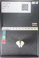 http://mczbase.mcz.harvard.edu/specimen_images/ent-lepidoptera/images/2011_03_29/IMG_079989.JPG