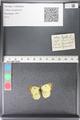 http://mczbase.mcz.harvard.edu/specimen_images/ent-lepidoptera/images/2011_03_30/IMG_080016.JPG