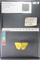 http://mczbase.mcz.harvard.edu/specimen_images/ent-lepidoptera/images/2011_03_30/IMG_080019.JPG
