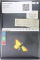 http://mczbase.mcz.harvard.edu/specimen_images/ent-lepidoptera/images/2011_03_30/IMG_080020.JPG