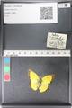 http://mczbase.mcz.harvard.edu/specimen_images/ent-lepidoptera/images/2011_03_30/IMG_080021.JPG