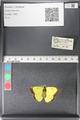 http://mczbase.mcz.harvard.edu/specimen_images/ent-lepidoptera/images/2011_03_30/IMG_080022.JPG