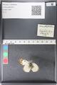 http://mczbase.mcz.harvard.edu/specimen_images/ent-lepidoptera/images/2011_03_30/IMG_080023.JPG