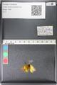 http://mczbase.mcz.harvard.edu/specimen_images/ent-lepidoptera/images/2011_03_30/IMG_080026.JPG