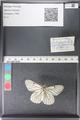 http://mczbase.mcz.harvard.edu/specimen_images/ent-lepidoptera/images/2011_03_30/IMG_080030.JPG