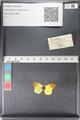 http://mczbase.mcz.harvard.edu/specimen_images/ent-lepidoptera/images/2011_03_30/IMG_080050.JPG