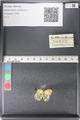 http://mczbase.mcz.harvard.edu/specimen_images/ent-lepidoptera/images/2011_03_30/IMG_080051.JPG