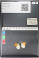 http://mczbase.mcz.harvard.edu/specimen_images/ent-lepidoptera/images/2011_03_30/IMG_080052.JPG