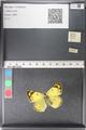 http://mczbase.mcz.harvard.edu/specimen_images/ent-lepidoptera/images/2011_03_30/IMG_080147.JPG
