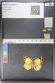 http://mczbase.mcz.harvard.edu/specimen_images/ent-lepidoptera/images/2011_03_30/IMG_080148.JPG