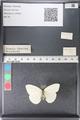 http://mczbase.mcz.harvard.edu/specimen_images/ent-lepidoptera/images/2011_03_30/IMG_080255.JPG