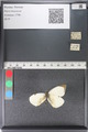 http://mczbase.mcz.harvard.edu/specimen_images/ent-lepidoptera/images/2011_04_04/IMG_081177.JPG