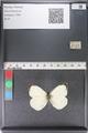 http://mczbase.mcz.harvard.edu/specimen_images/ent-lepidoptera/images/2011_04_04/IMG_081178.JPG