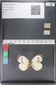 http://mczbase.mcz.harvard.edu/specimen_images/ent-lepidoptera/images/2011_04_04/IMG_081179.JPG