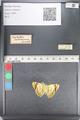 http://mczbase.mcz.harvard.edu/specimen_images/ent-lepidoptera/images/2011_05_11/IMG_086455.JPG