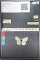 http://mczbase.mcz.harvard.edu/specimen_images/ent-lepidoptera/images/2011_06_21/IMG_087998.JPG