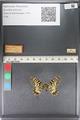 http://mczbase.mcz.harvard.edu/specimen_images/ent-lepidoptera/images/2011_07_01/IMG_089368.JPG