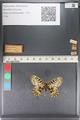 http://mczbase.mcz.harvard.edu/specimen_images/ent-lepidoptera/images/2011_07_01/IMG_089373.JPG