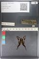 http://mczbase.mcz.harvard.edu/specimen_images/ent-lepidoptera/images/2011_07_01/IMG_089459.JPG