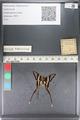 http://mczbase.mcz.harvard.edu/specimen_images/ent-lepidoptera/images/2011_07_01/IMG_089465.JPG