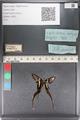 http://mczbase.mcz.harvard.edu/specimen_images/ent-lepidoptera/images/2011_07_01/IMG_089481.JPG