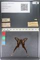 http://mczbase.mcz.harvard.edu/specimen_images/ent-lepidoptera/images/2011_07_01/IMG_089498.JPG