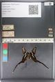 http://mczbase.mcz.harvard.edu/specimen_images/ent-lepidoptera/images/2011_07_01/IMG_089499.JPG