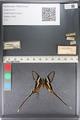 http://mczbase.mcz.harvard.edu/specimen_images/ent-lepidoptera/images/2011_07_01/IMG_089501.JPG
