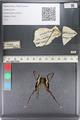 http://mczbase.mcz.harvard.edu/specimen_images/ent-lepidoptera/images/2011_07_01/IMG_089504.JPG