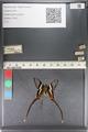 http://mczbase.mcz.harvard.edu/specimen_images/ent-lepidoptera/images/2011_07_01/IMG_089505.JPG