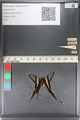 http://mczbase.mcz.harvard.edu/specimen_images/ent-lepidoptera/images/2011_07_01/IMG_089508.JPG