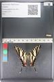 http://mczbase.mcz.harvard.edu/specimen_images/ent-lepidoptera/images/2011_07_01/IMG_089534.JPG