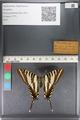 http://mczbase.mcz.harvard.edu/specimen_images/ent-lepidoptera/images/2011_07_01/IMG_089538.JPG