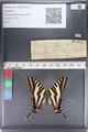 http://mczbase.mcz.harvard.edu/specimen_images/ent-lepidoptera/images/2011_07_01/IMG_089539.JPG