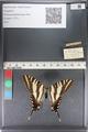 http://mczbase.mcz.harvard.edu/specimen_images/ent-lepidoptera/images/2011_07_01/IMG_089541.JPG