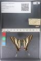 http://mczbase.mcz.harvard.edu/specimen_images/ent-lepidoptera/images/2011_07_01/IMG_089542.JPG