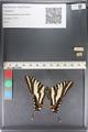 http://mczbase.mcz.harvard.edu/specimen_images/ent-lepidoptera/images/2011_07_01/IMG_089543.JPG
